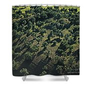 Olive Farmland In Spain Shower Curtain