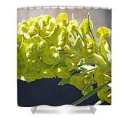 Olive Fluorescence Shower Curtain