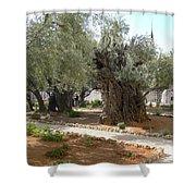 Olive Garden Shower Curtain