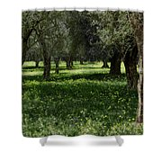 Olive Grove Color Italy Shower Curtain