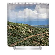 Olive Trees In A Field, Ubeda, Jaen Shower Curtain