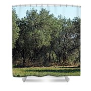 Olive Trees Of Provence Shower Curtain