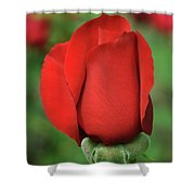 Olympiad Hybrid  2 Shower Curtain
