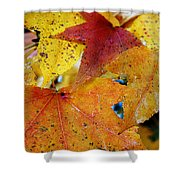 On A Nice Autumn Day Shower Curtain