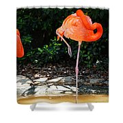 On Stilts Shower Curtain