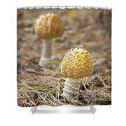 On The Forest Floor Shower Curtain