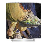 On The Hunt Shower Curtain
