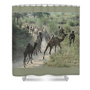 On The Road To Pushkar Shower Curtain