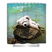 On The Rocks - Teddy Bear Art By William Patrick And Sharon Cummings Shower Curtain