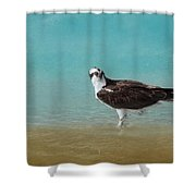On The Shore - Osprey Shower Curtain