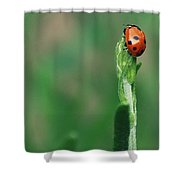 For Luck Shower Curtain