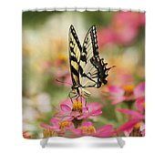 On The Top - Swallowtail Butterfly Shower Curtain
