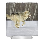 On The Trot Shower Curtain
