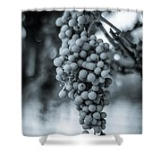 On The Vine  Bw Shower Curtain
