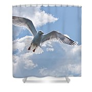 On The Wings Of A Gull Shower Curtain