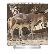 Onager Equus Hemionus 1 Shower Curtain