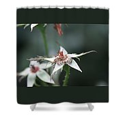 Once So Vibrant Rose Shower Curtain