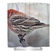 Once Upon A Winters Day Blank Greeting Card Shower Curtain