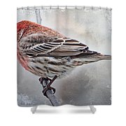 Once Upon A Winters Day Shower Curtain