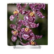 Oncidium Shower Curtain