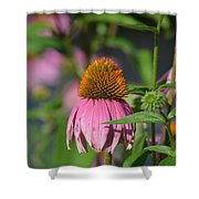 One Among The Coneflowers Shower Curtain