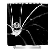 One Creepy Spider... Shower Curtain