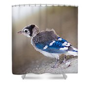one day...I will fly Shower Curtain by Shane Holsclaw
