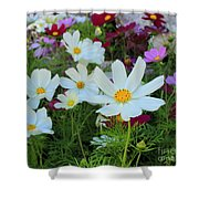One Flower Stands Out Shower Curtain