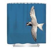 One Good Tern Shower Curtain
