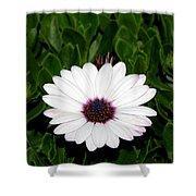 One Hit Wonder Gerbera Daisy Shower Curtain