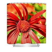 One Lazy Petal Shower Curtain