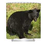 One Of The Quads Shower Curtain