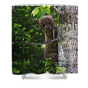 One Of Three Shower Curtain