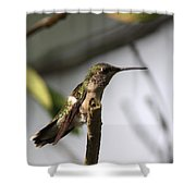 One Out Of Place - Hummingbird Shower Curtain