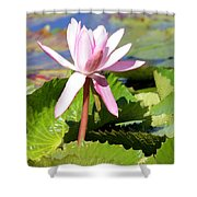 One Pink Water Lily Shower Curtain