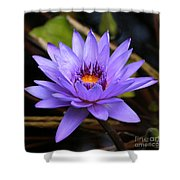 One Purple Water Lily Shower Curtain by Carol Groenen