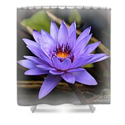 One Purple Water Lily With Vignette Shower Curtain