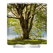 One Spring Tree Shower Curtain