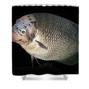 One Strange Fish Shower Curtain
