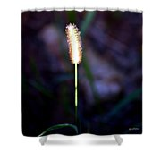 One Sunlit Candle Shower Curtain