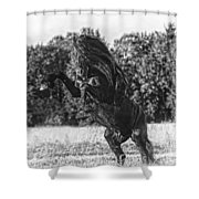 One Trick Pony Shower Curtain