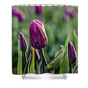 One Tulip Among Many Shower Curtain