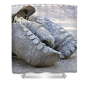 One Very Old Very Large Sulcata Tortoise Shower Curtain
