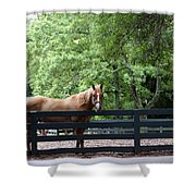 One Very Pretty Hilton Head Island Horse Shower Curtain