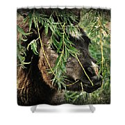 Onery Mini Filly Shower Curtain