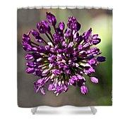Onion Flower Shower Curtain