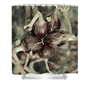 Onion Seed Heads Shower Curtain