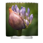 Only The Beginning Shower Curtain by Rona Black