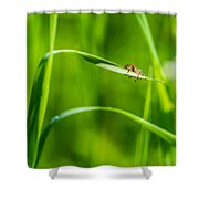Oops Ooover-load - Featured 2 Shower Curtain