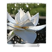 Opaque Lily Shower Curtain